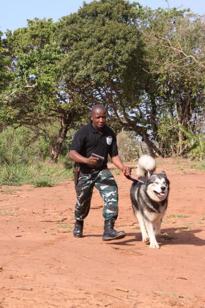 how to become a security dog handler